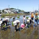 食育プロジェクト2014田植え体験